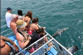 Dolphin Cruise with Brisbane Transfers, Family