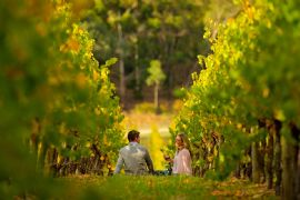 Full Day McLaren Vale Gourmet and Wine Tour
