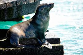 3 hour Dolphin and Seal Cruise Sightsee, Child