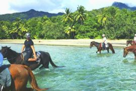 Cape Tribulation Mid Morning Beach Horse Ride