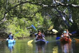 Eco Kayak and SUP Tour