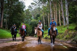 2-Hour Guided Horse Ride