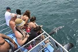 Dolphin Cruise, Adult